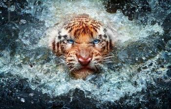 عکاسی حیات وحش Wildlife photography