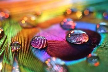 عکاسی ماکرو Macro photography