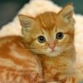 .عکاسی گربه و یک ثبت هیجان انگیز