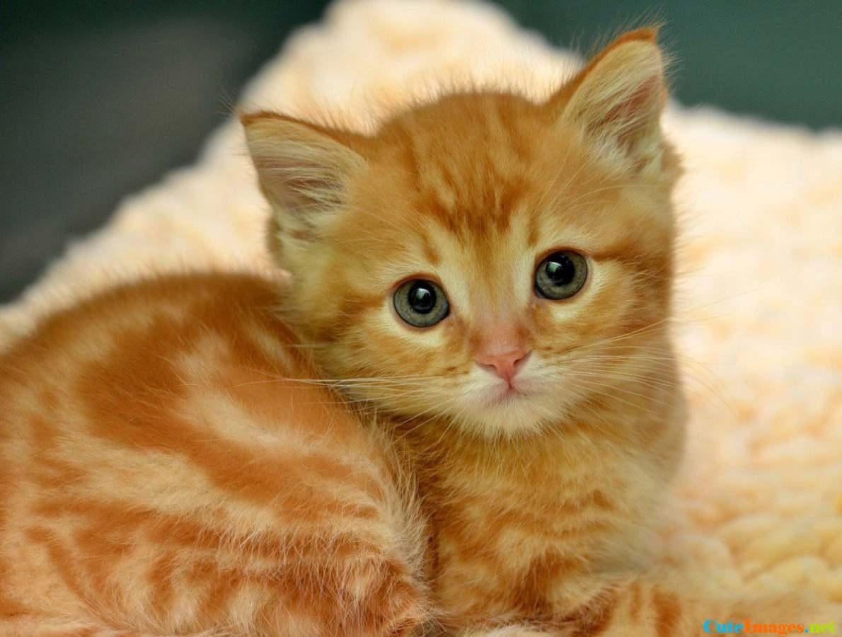 عکاسی گربه و یک ثبت هیجان انگیز