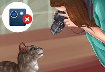 فلاش و گربه