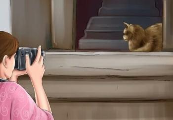 comfort your cat