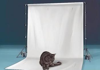 آتلیه گربه