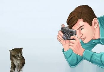 عکاسی از گربه