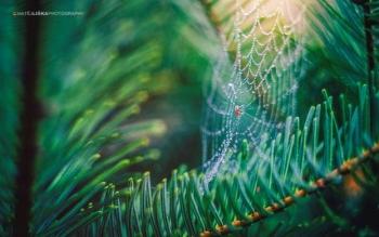 عکاسی از عنکبوت