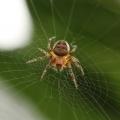 .شش راهکار برای عکاسی از تار عنکبوت