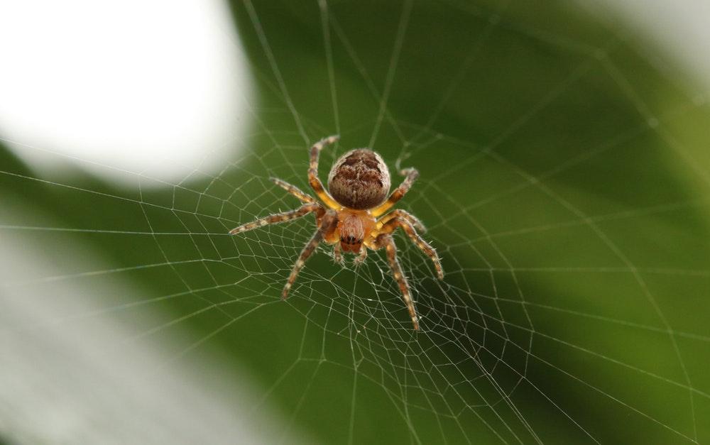 شش راهکار برای عکاسی از تار عنکبوت