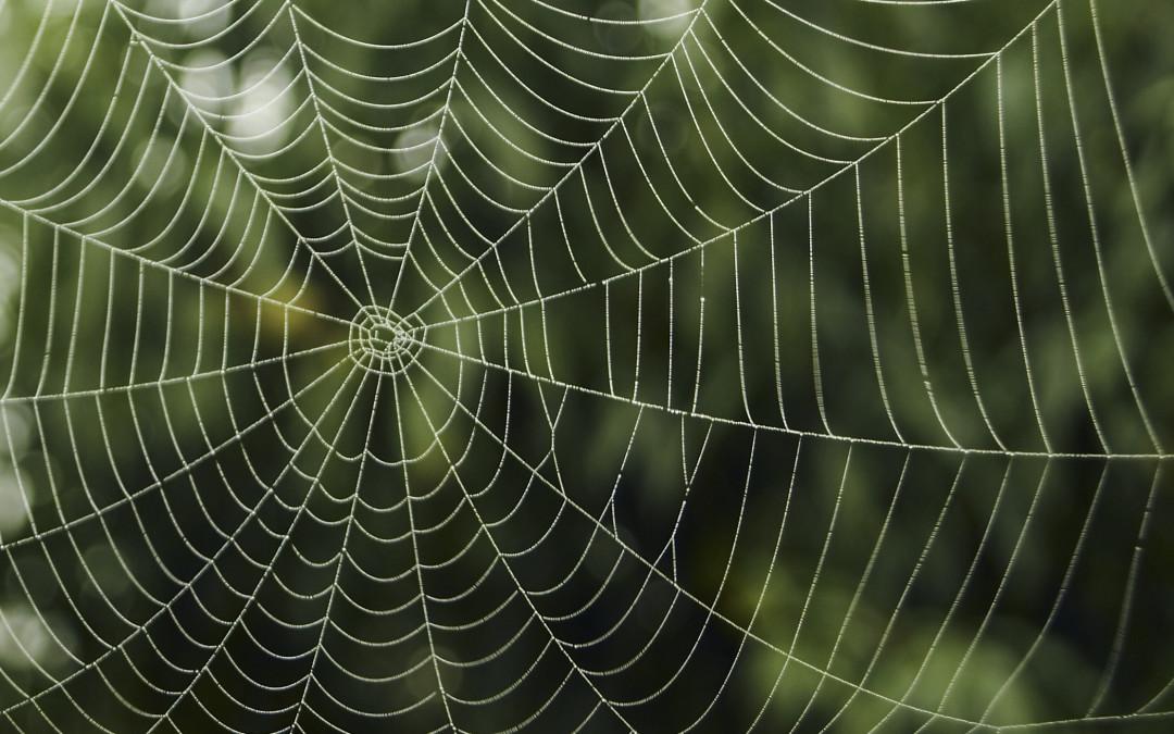 اصول طلایی عکاسی تار عنکبوت در طبیعت