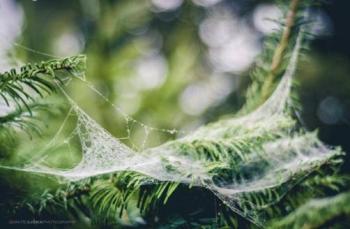 عکاسی بوکه تار عنکبوت