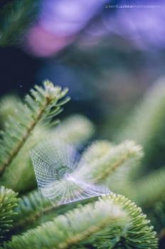 عکاسی تارعنکبوت