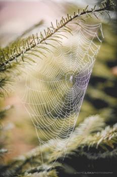 عکاسی از تار عنکبوت