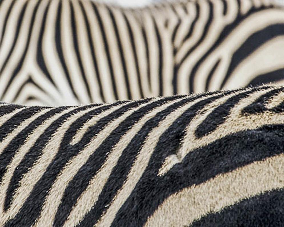 عکاسی در باغ وحش