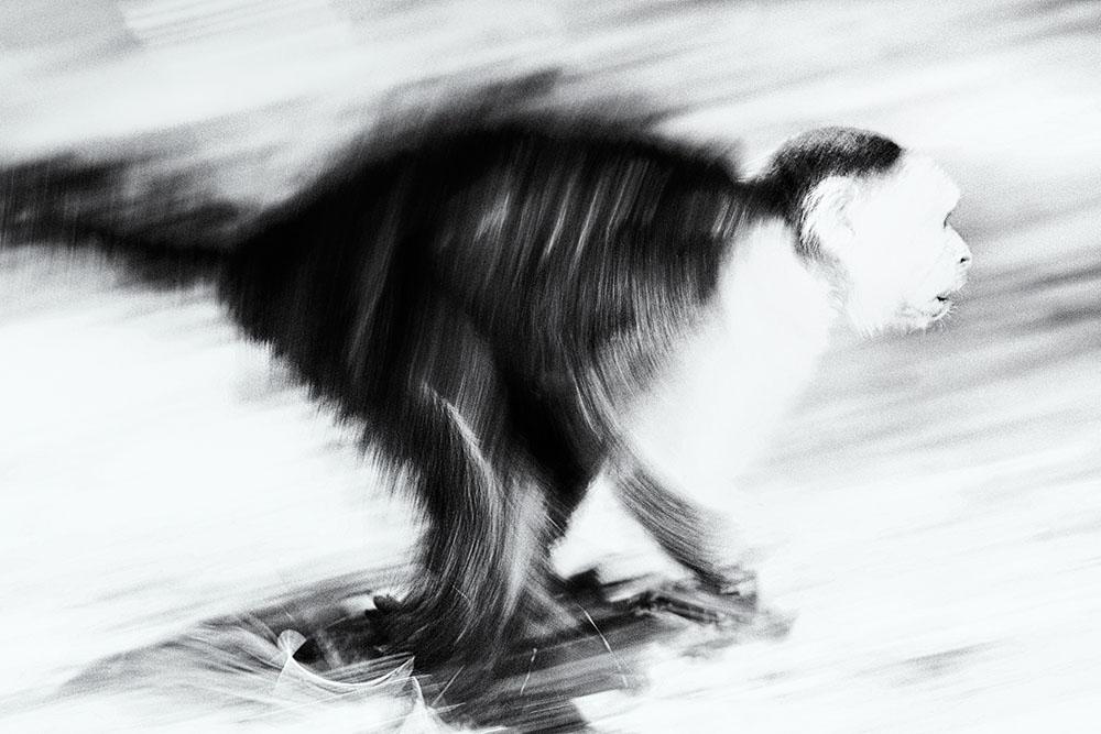 پنینگ و موشن بلور در عکاسی حیوانات