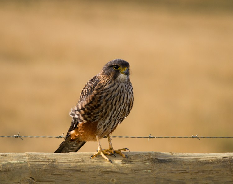 لذت عکاسی از پرندگان