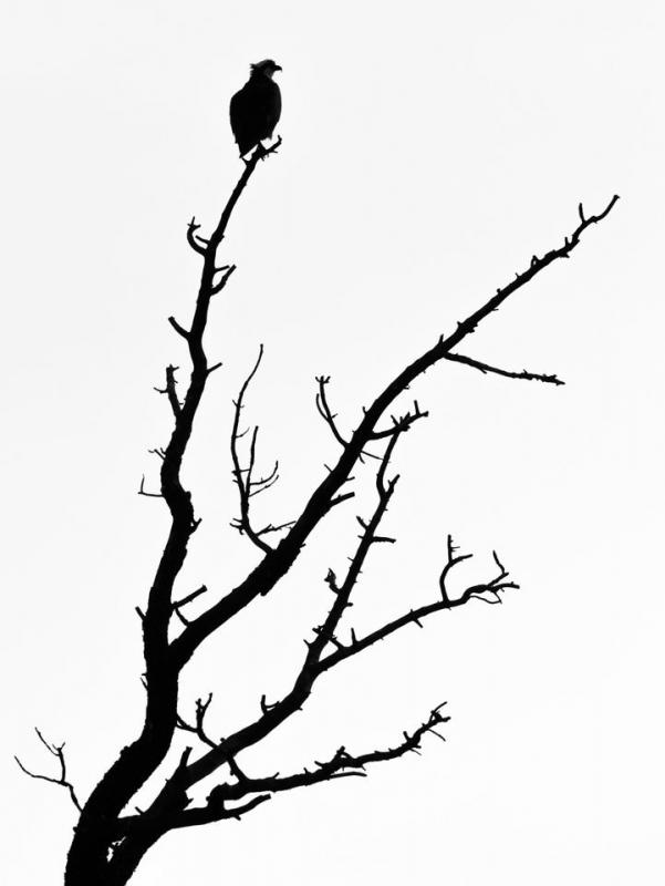 فضای منفی در عکاسی طبیعت