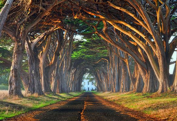 ۸ روش خلاقانه برای عکاسی از درختان