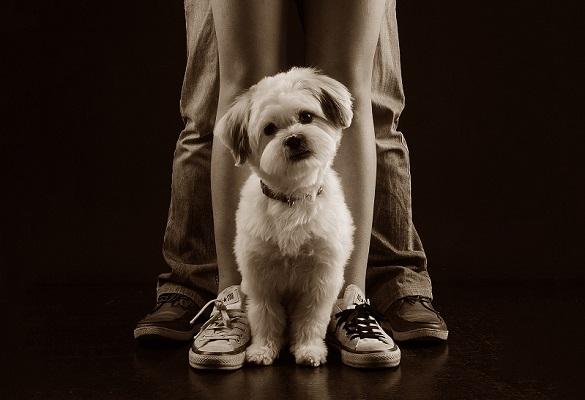 آموزش عکاسی از حیوانات خانگی