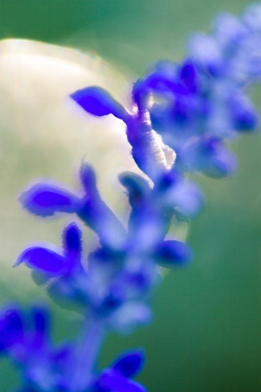 7 تکنیک عکاسی از طبیعت
