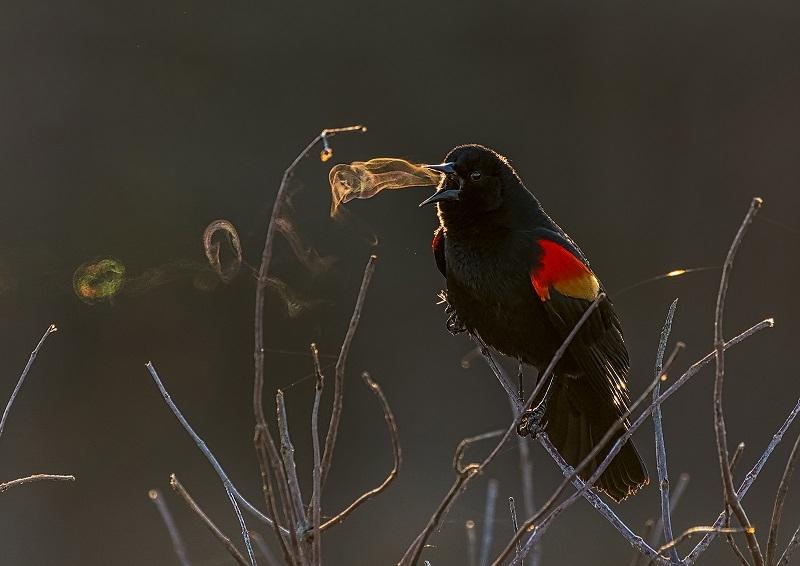 عکاسی از پرندگان