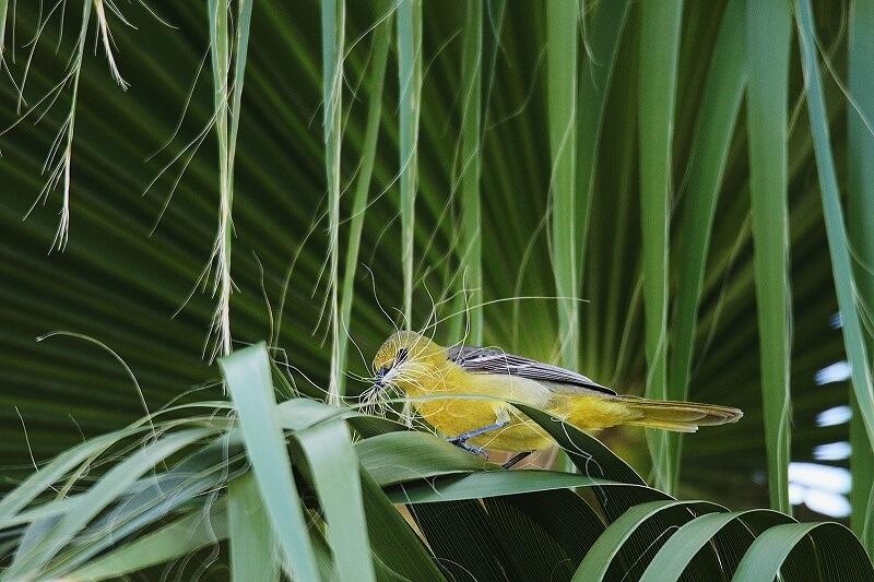 عکاسی از پرنده پری شاهرخ کلاهدار در میان گیاهان