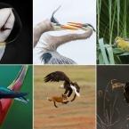 .آثار برگزیده مسابقه Audubon 2019 معرفی شدند