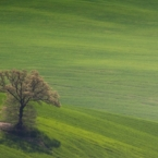 .عکاسی مینیمالیستی : هنر ساده گرایی در عکاسی